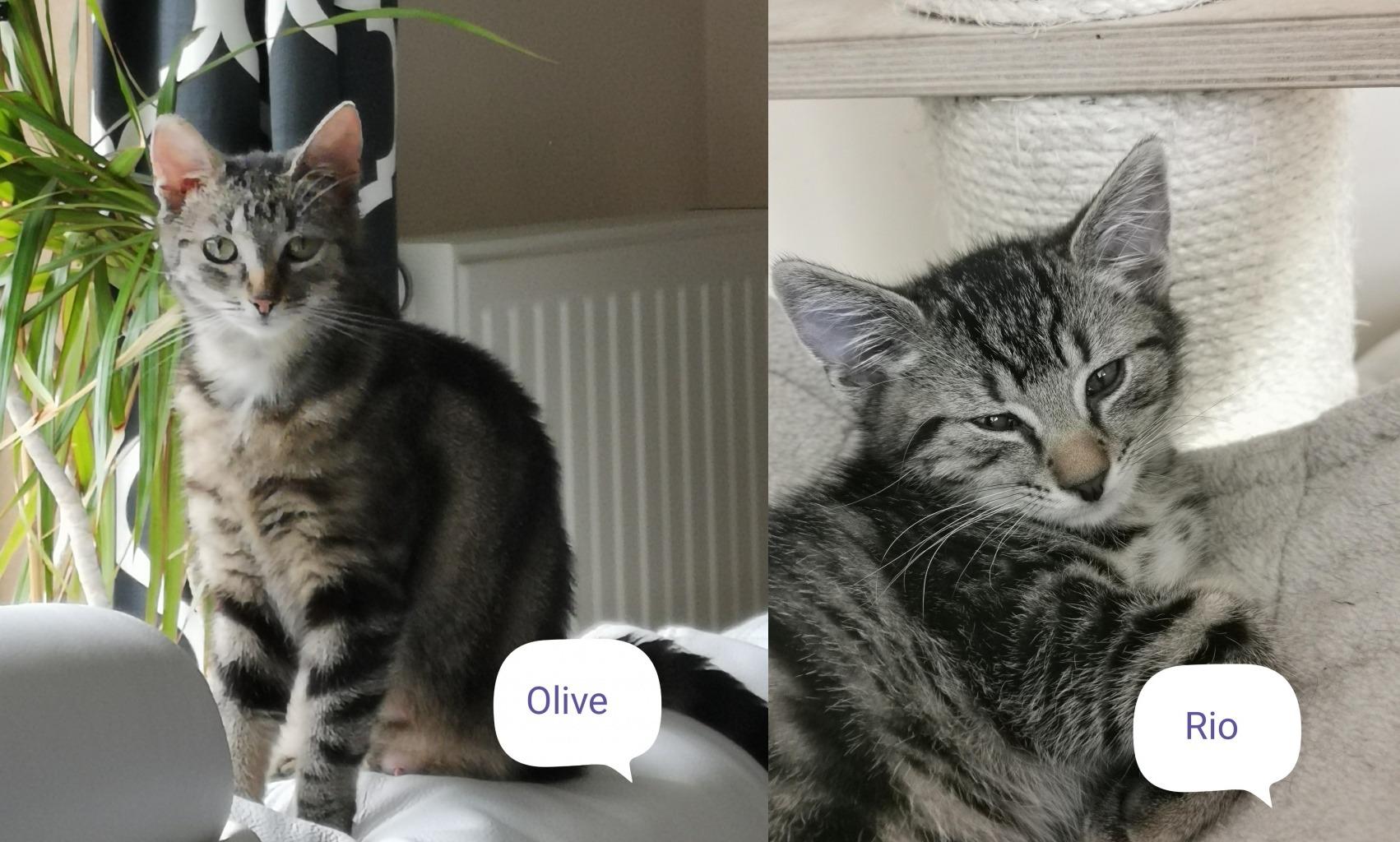 Olive en Rio